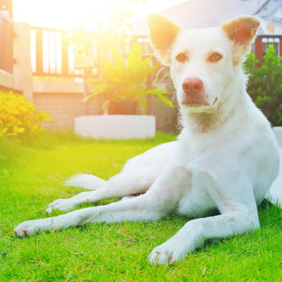 4 Reasons You Need Artificial Turf For Your Pets